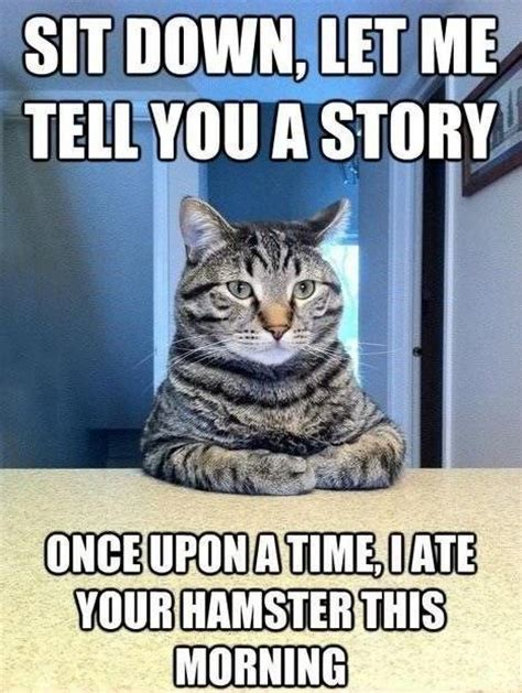 Cheezburger Cat Meme - hamsters laughing and cats on pinterest
