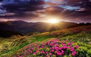 Sunset mountains flowers landscape wallpaper | 1920x1200 ...
