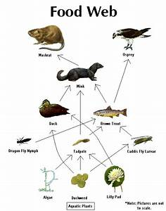 How Can You Trace An Animal U0026 39 S Trophic Level On A Food Web