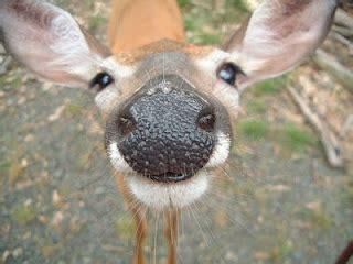 white tailed deer pictures  news icon