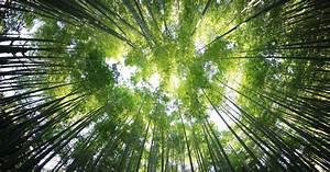 Was Können Sie Tun Um Die Umwelt Zu Schonen : das k nnen sie tun um die umwelt zu schonen das haus ~ Watch28wear.com Haus und Dekorationen
