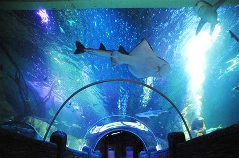 sea aquarium vouchers blackpool big ticket save more than 50 at top attractions