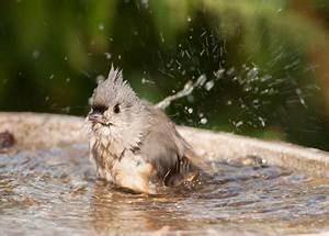 Kleine Vögel Im Garten : vogeltr nke und vogelbad im garten ~ Lizthompson.info Haus und Dekorationen