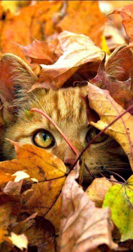 1253 Best Cats In The Garden Images On Pinterest Kitty
