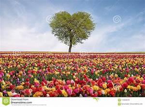 Baum Der Liebe : baum der liebe im fr hjahr geformter baum des herzens gegen blauen himmel sch ne landschaft mit ~ Eleganceandgraceweddings.com Haus und Dekorationen
