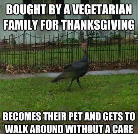 Turkey Meme - happy thanksgiving 2017 turkey day memes to wish your beloved ones steemit