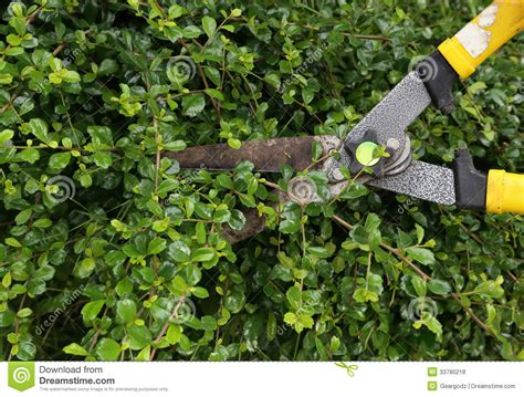 trimming bushes trimming bushes www pixshark com images galleries with
