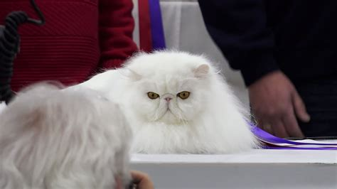 Cfa International Cat Show 2016  Best Of The Best Youtube