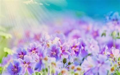 Summer Flowers Wallpapers Desktop Google Wallpapersafari