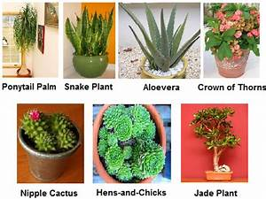 Indian Desert Plants With Names