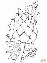 Artichoke Coloring Magnolia Flower Pages Drawing Printable Supercoloring Getcolorings Coloringbay Campbells sketch template