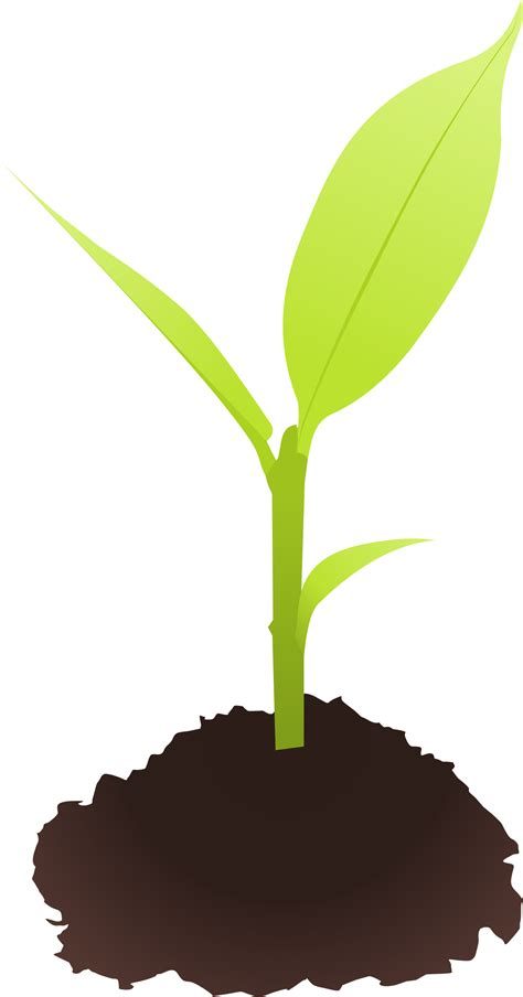 Plant Clip Soil Clipart Small Plant Pencil And In Color Soil