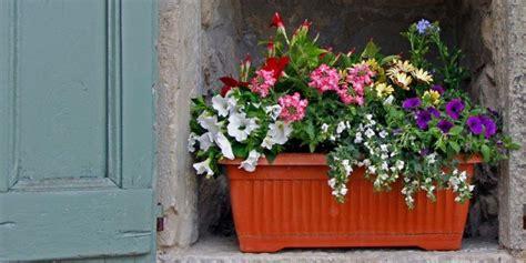 fiori da davanzale sul davanzale una cassetta fiorita tutta l estate cose