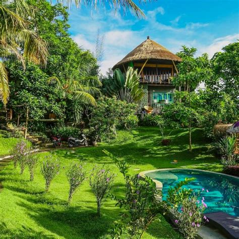 treehouse airbnb  bali  costs   night