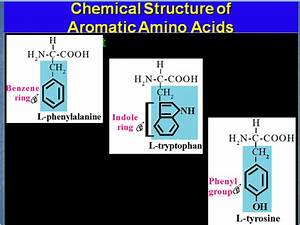 What Does The Letter R Represent In An Amino Acid Diagram