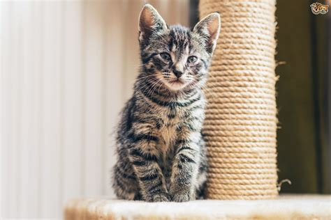 safe cat friendly solutions  clawing