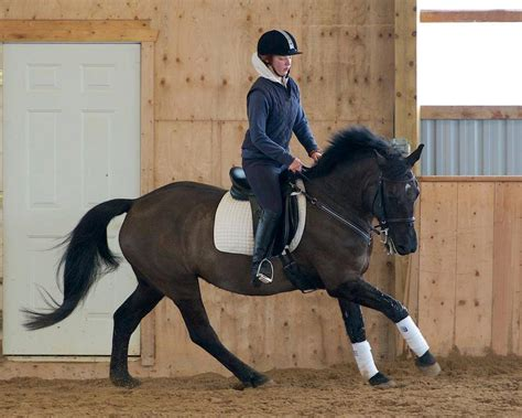 thoroughbred classifieds canadian energetic horse canada horses