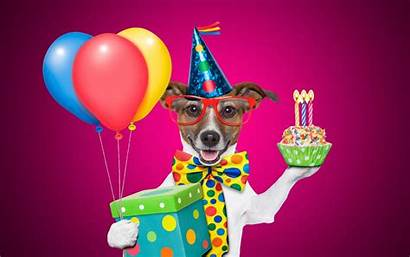 Birthday Funny Happy Wishes Wallpapers Background Desktop
