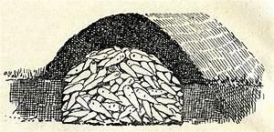 Kartoffeln Lagern Ohne Keller : kartoffelsorten f r den anbau im garten wahl nach reifezeit fr hkartoffeln ~ Frokenaadalensverden.com Haus und Dekorationen