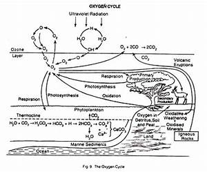The Nitrogen and the Oxygen Cycle (With Diagram)