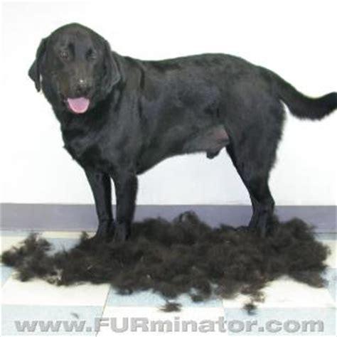 hair shedding solutions furminator
