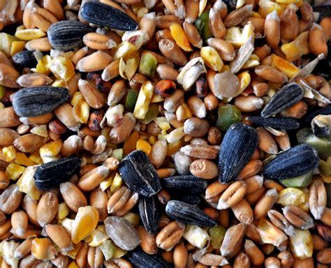 humming bird food ingredients for sale