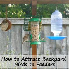 1000 images about how to attract birds on pinterest