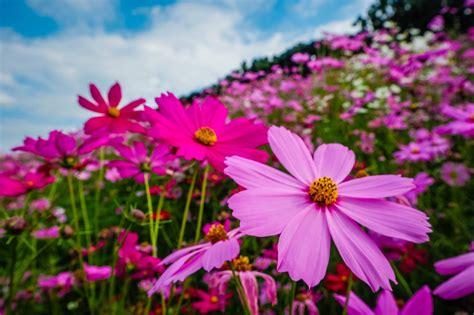 โลกเป็นสีชมพู!! 6 สวนดอกไม้สีชมพูพิงค์ จูงมือแฟนเช็กอิน ...