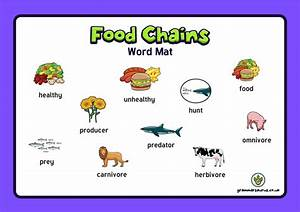 Year 4 Science - Animals Including Humans - The Food Chain ...