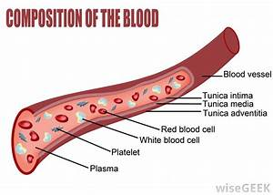 What Is Vascular Permeability   With Pictures