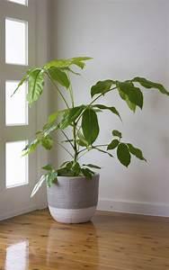 5, Big, And, Beautiful, Indoor, Plants