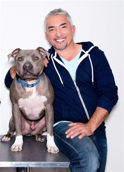 dog whisperer  sued  pit bull attack time
