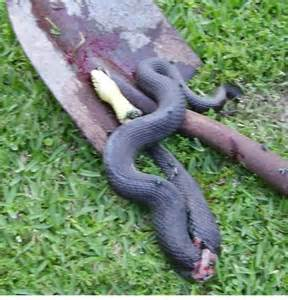 electric snake fence snake electric fence photography 3540
