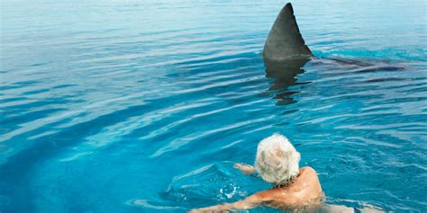 Bigfoot Evidence Live Shark Discovered In Florida