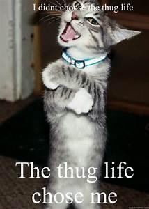 Top 26 thug life cat Memes - Thug Life Meme