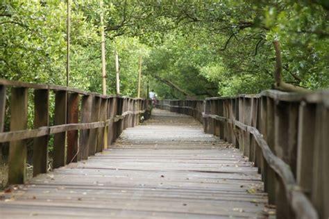 fungsi hutan mangrove pengertian jenis gambar