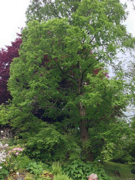 Botanischer Garten Ab Welchem Alter by Alter Botanischer Garten G 246 Ttingen Zx Zarkov De