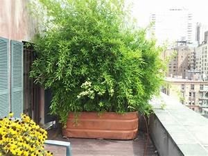 bambus im kubel als sichtschutz und deko auf der terrasse With französischer balkon mit bambus im garten pflanzen