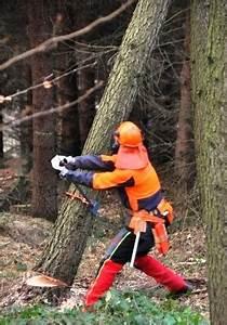 Baum Fällen Technik : exaktes baumf llen mittels f llzirkel und f llfahne ~ A.2002-acura-tl-radio.info Haus und Dekorationen