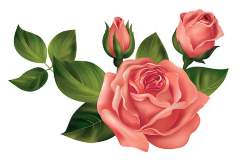 Transparent Roses PNG Clipart Picture Gallery