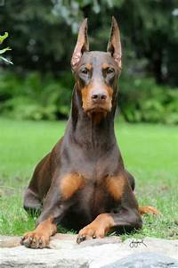 The gallery for --> Doberdane