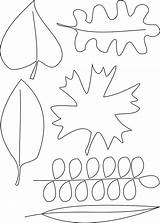 Draw Coloring Pages Template Lasagna Leaf Printable Drawing Sketch sketch template