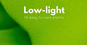 14 Low-light Freshwater Plants Perfect For The Novice Aquarist
