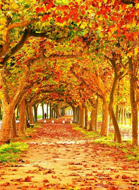 Orange Fall Wallpaper by Fall 2018 Wallpapers Wallpaper Cave