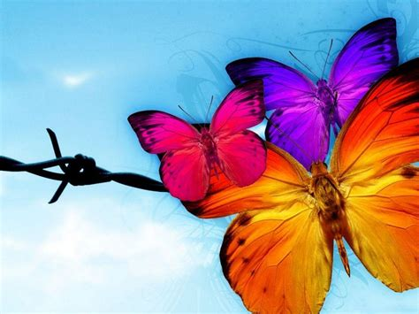 Free Cool Wallpapers Butterfly Wallpapers