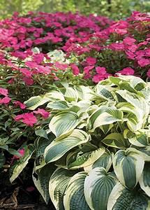 Hosta Companion Plants Bing Images