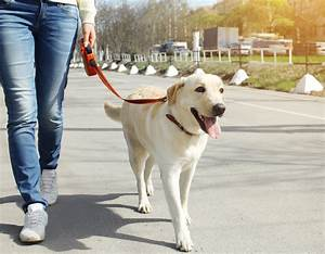Starting a dog walking business protectivity for Puppy dog walker