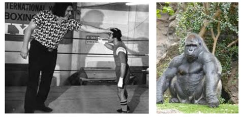How Strong Is a Silverback