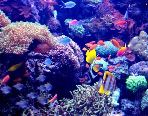 New England Aquarium  Autos Post