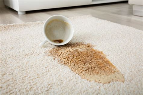How to remove coffee stains from your carpet, clothes, and just about everything else. -How To Get Dried Coffee Stain Out Of Wool Carpet di 2020 (Dengan gambar)